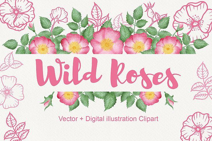Wild Rose Clipart Rose Hip