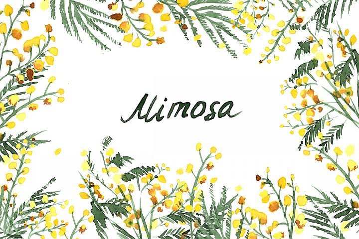 Mimosa flowers watercolor clipart, hand-drawn. Mimosa Yellow wedding flowers. Logo Blog. Flower watercolor Clipart, Hand-painted graphics