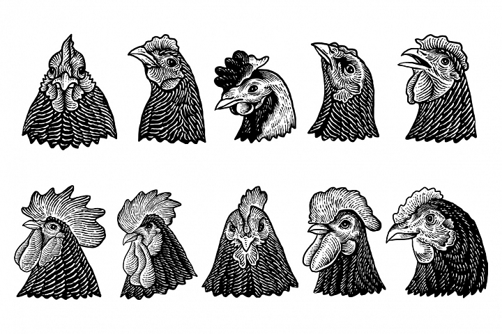 10 Chicken head art design