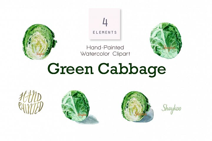 Green Cabbage Watercolor Clipart, Cabbage Illustration