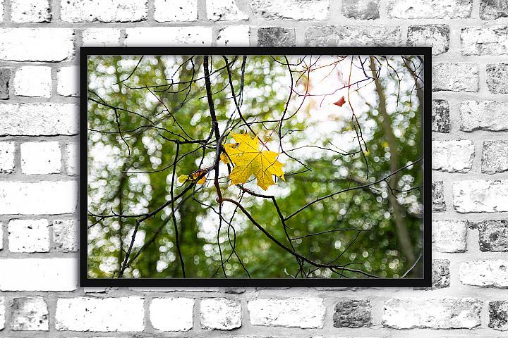 Nature photo, floral photo, autumn print