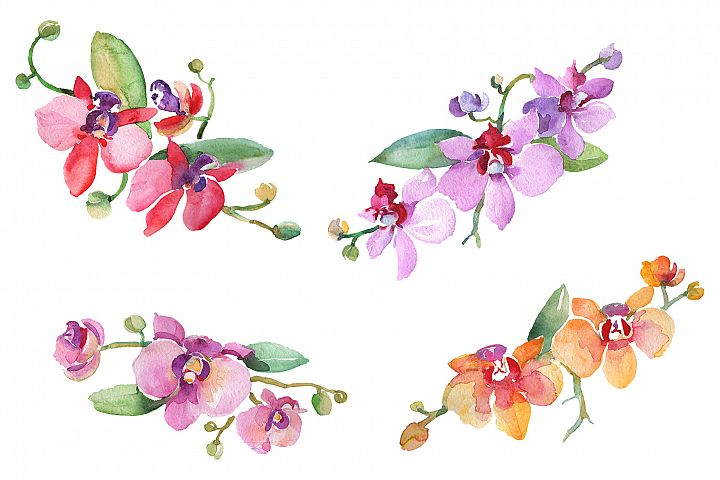 Branch with orchids Watercolor png