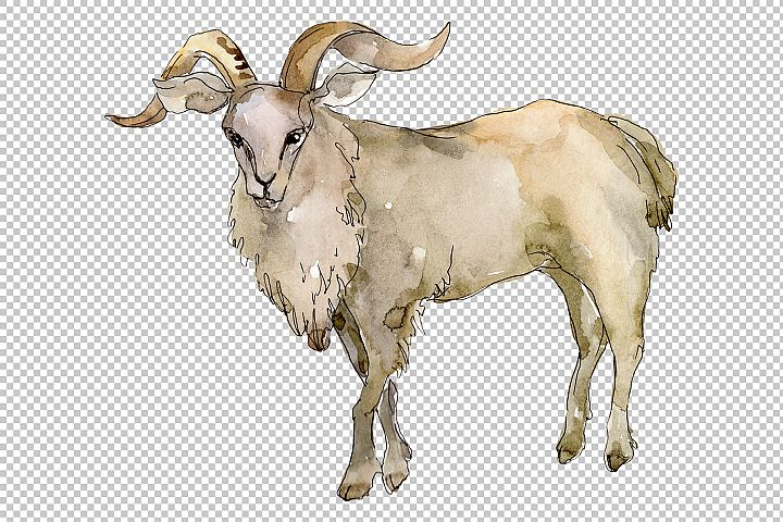 Agriculture goat Watercolor png