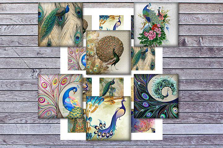 BirdsFeather,Peafowl,Colorful Birds,2,1.5,1.25,1,35,30mm