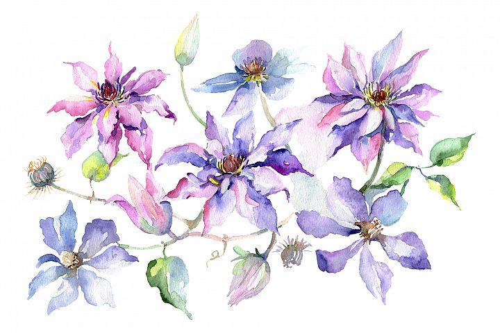 Branch of gentle purple flowers Watercolor png
