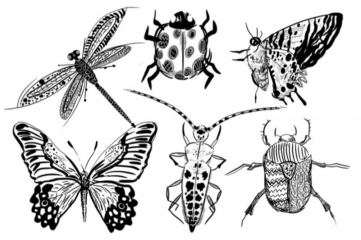 6 hand-drawn black insects set