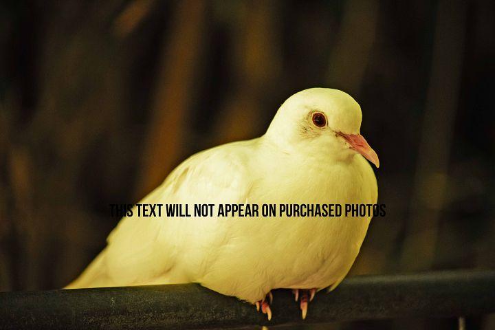 9 Beautiful Birds example 4