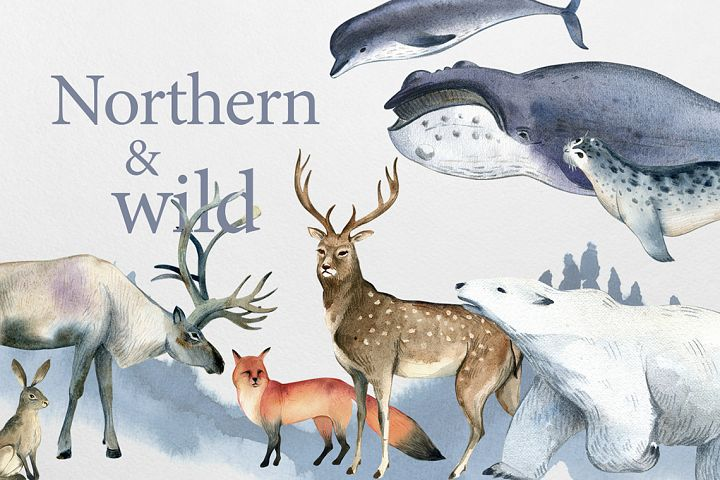 Northern and wild