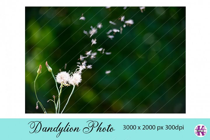 Dandylion blowing in the wind Photo jpg