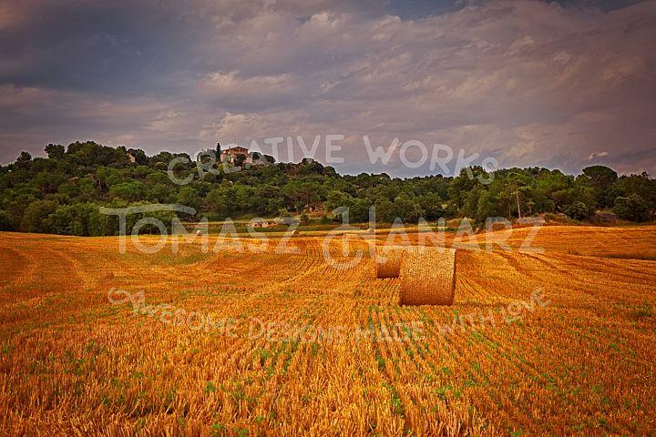 Harvest Field 2