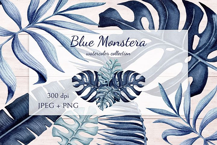 Blue Monstera