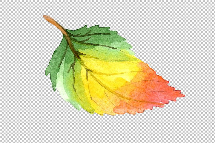 Colorful autumn leaves watercolor png set