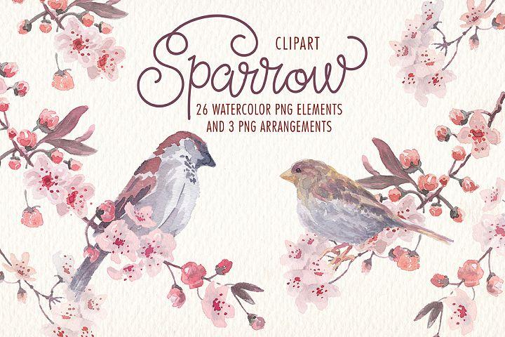 Sparrow bird watercolor clipart