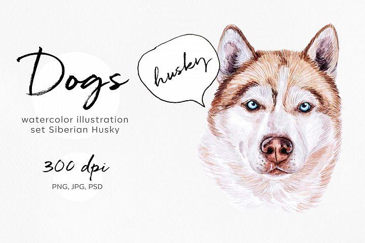 Siberian Husky. Watercolor set dog illustrations. 8 dogs