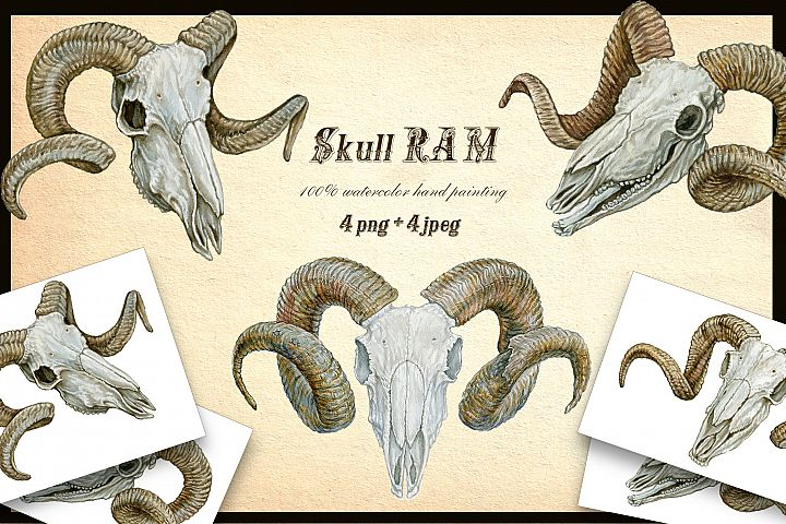 RAMs skull. 4 images.watercolour painting ,