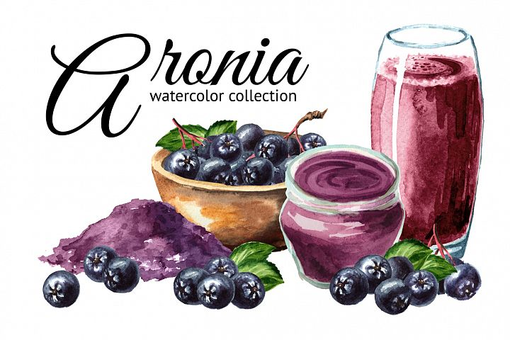 Aronia. Watercolor collection