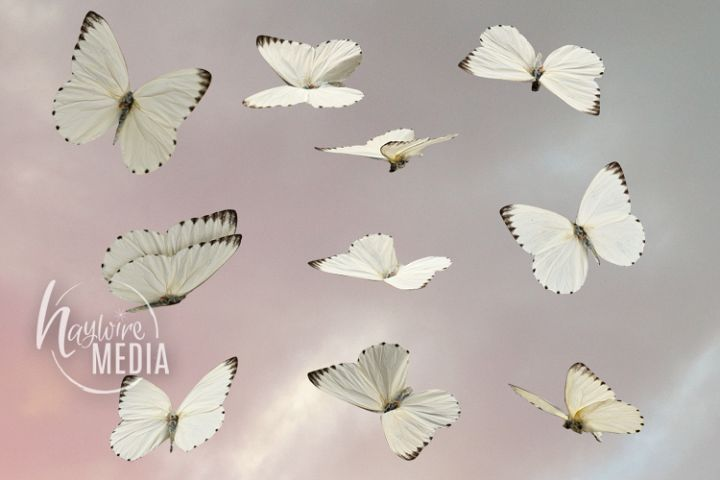 10 Transparent PNG White Butterfly Moth Fairytale Wings