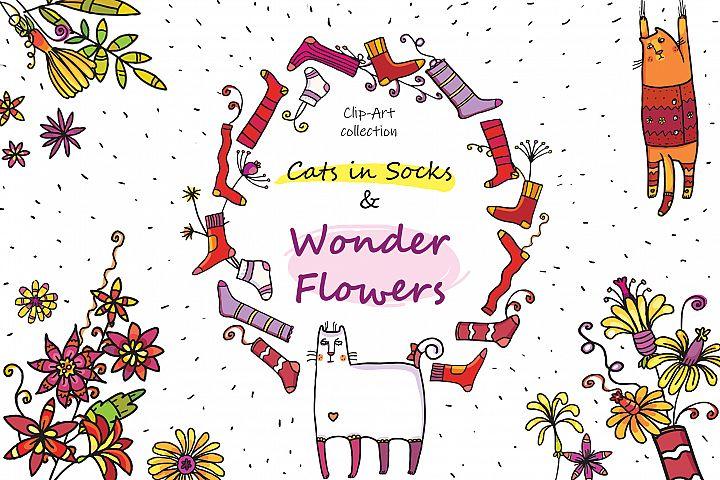 Cats in Socks & Wonder Flowers