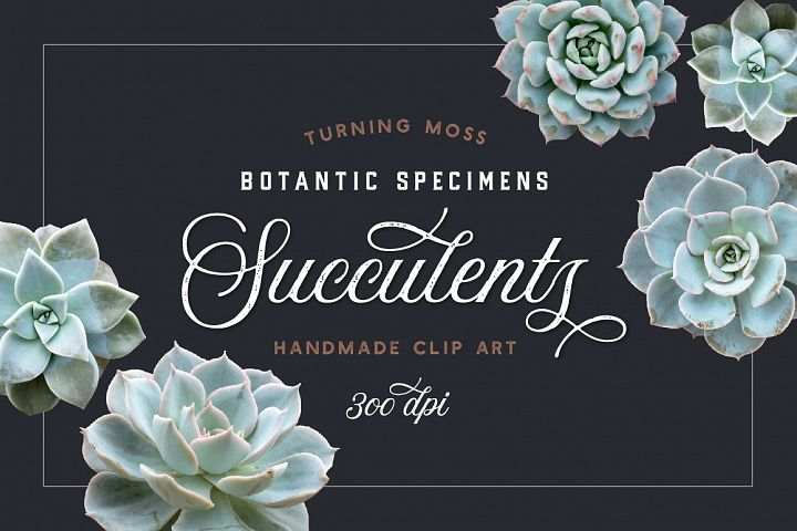 Succulents - Botanic Specimens - Realistic Isolated Objects