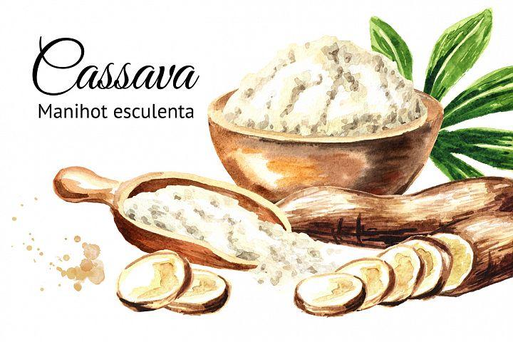 Cassava. Manihot escule