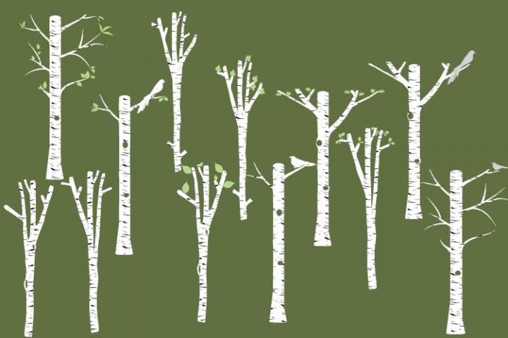 White Birch clipart, Tree clipart, Birch vector, Birch PNG