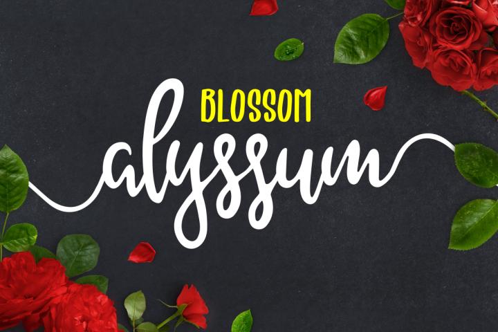 Alyssum Blossom