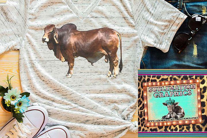 Brahman Bull Sublimation Download