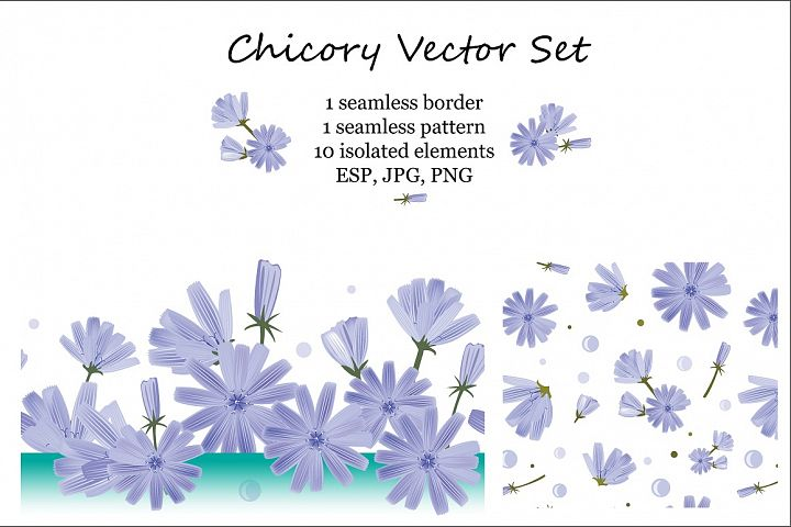 Chicory Vector Set