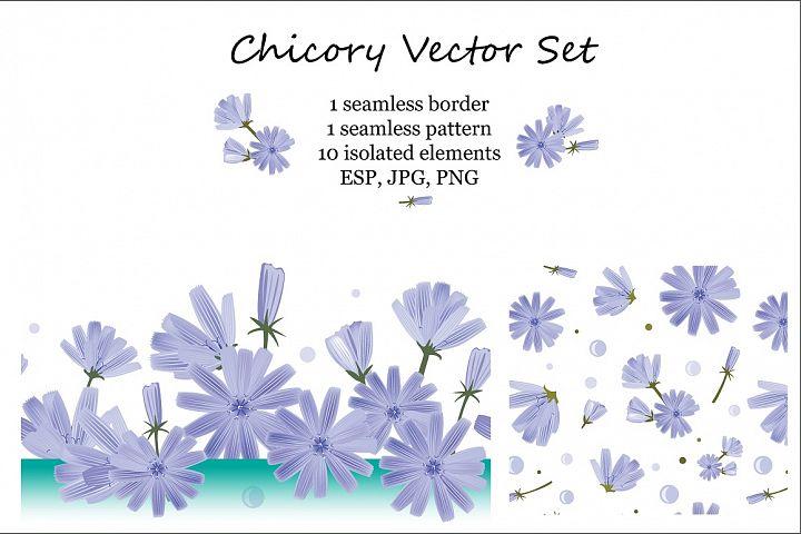 Chicory Vector Set