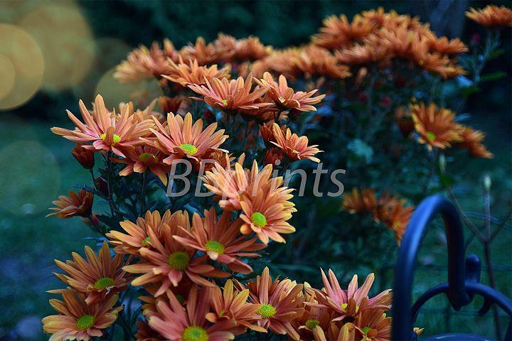 Nature photo, flower photo, floral photo, autumn photo