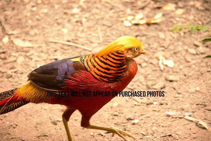 9 Beautiful Birds example 9