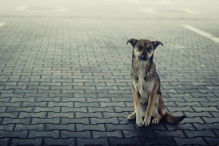 Dog, Animal, Loneliness, Lonely Dog