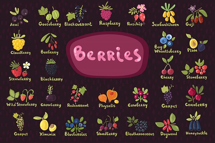Berries - Vector Set