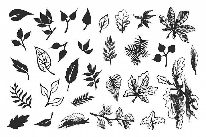 Foliage. Hand drawn leaves.