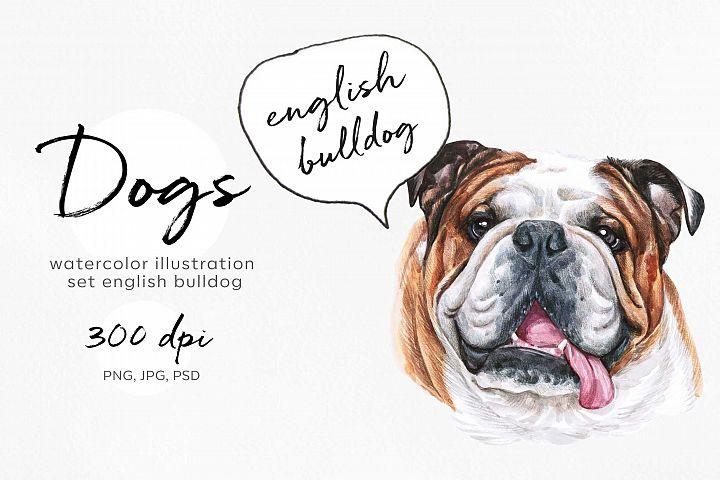 English bulldog. Big watercolor set 12 dog illustrations