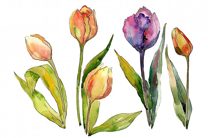 Bouquet of flowers from tulips romance watercolor png