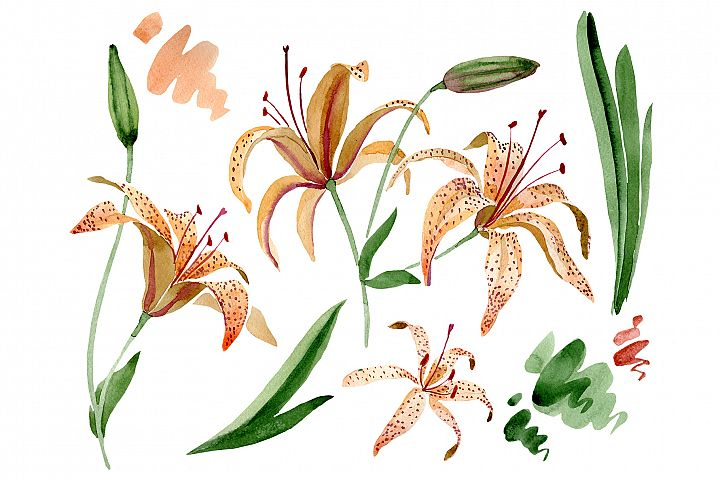 Orange spotted lily watercolor png