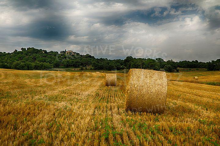 Harvest Field 6