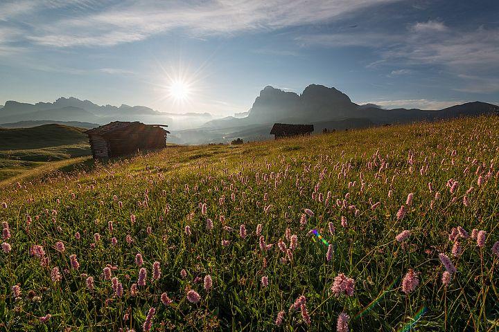 Beautiful flowers at Alpe di Siusi