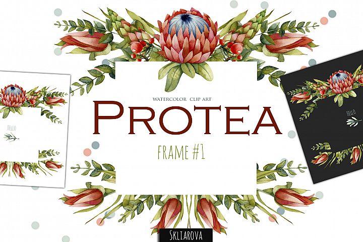 Protea. Frame #1