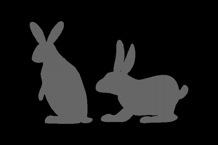 Rabbit Image Vector