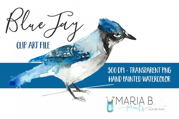 Blue Jay Bird Watercolor Clip Art PNG