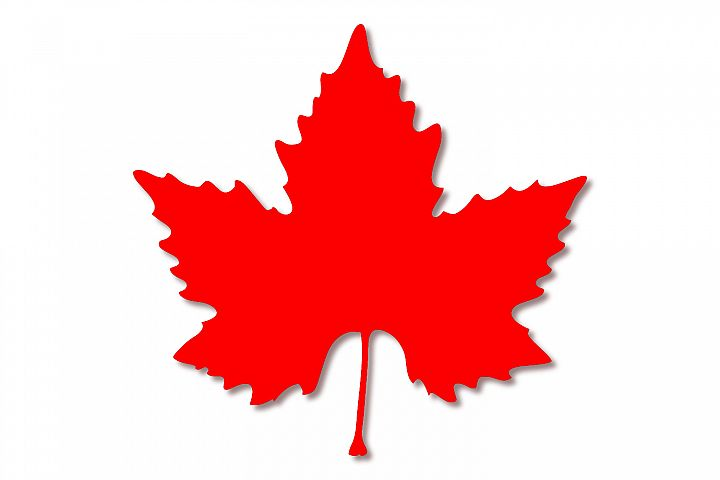 Red maple leaf - color