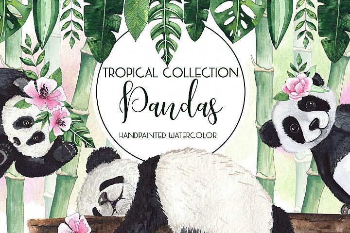Pandas. Tropical collection