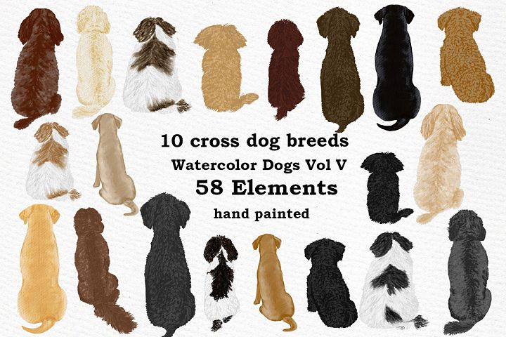 Dog Clipart, Dog breeds, Pet clipart, Cross Dog Breeds Png