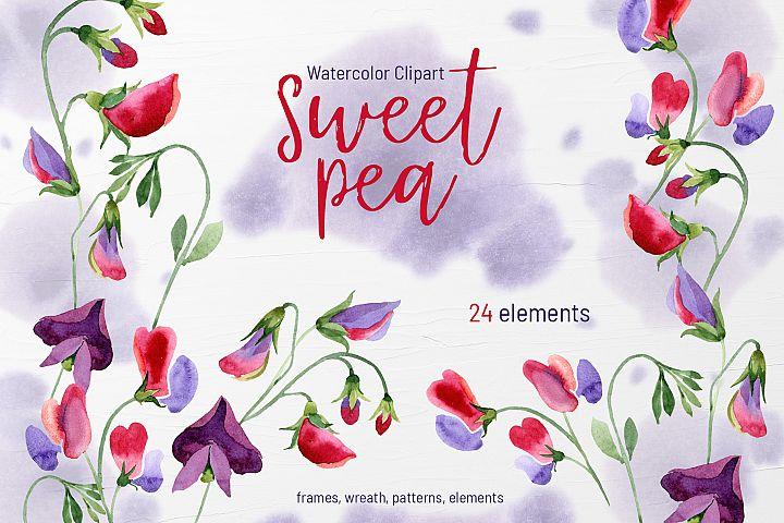 Watercolor Flowers Sweet Pea PNG