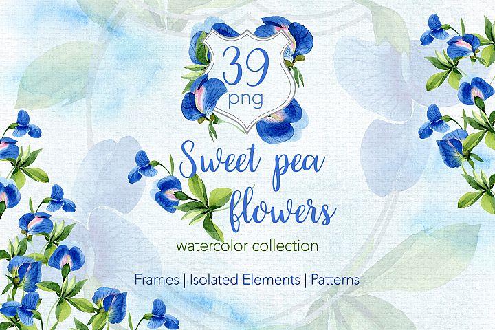 Sweet pea flowers Watercolor png