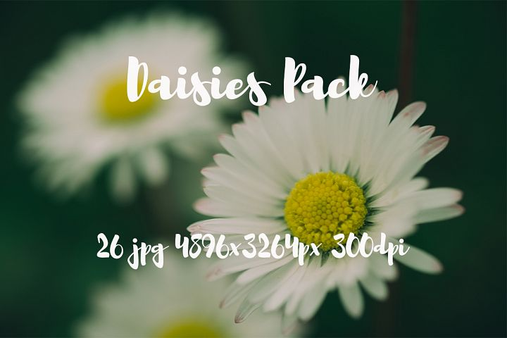 Daisies photo pack