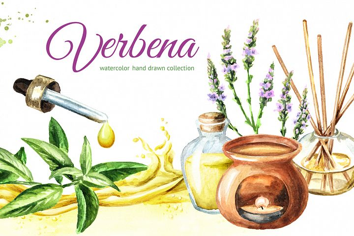 Verbena. Watercolor collection