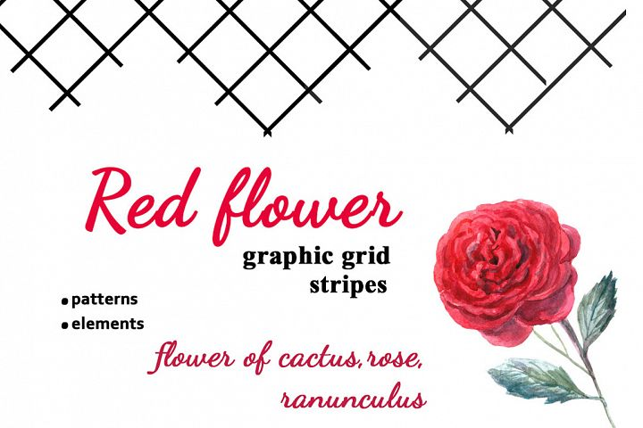 Watercolor red roses with stripes.